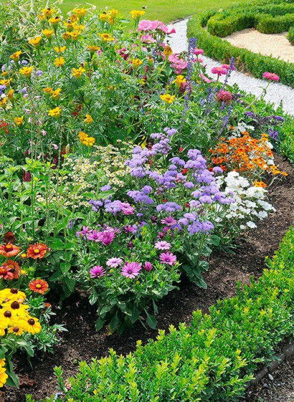 beautiful background of bright garden flowers